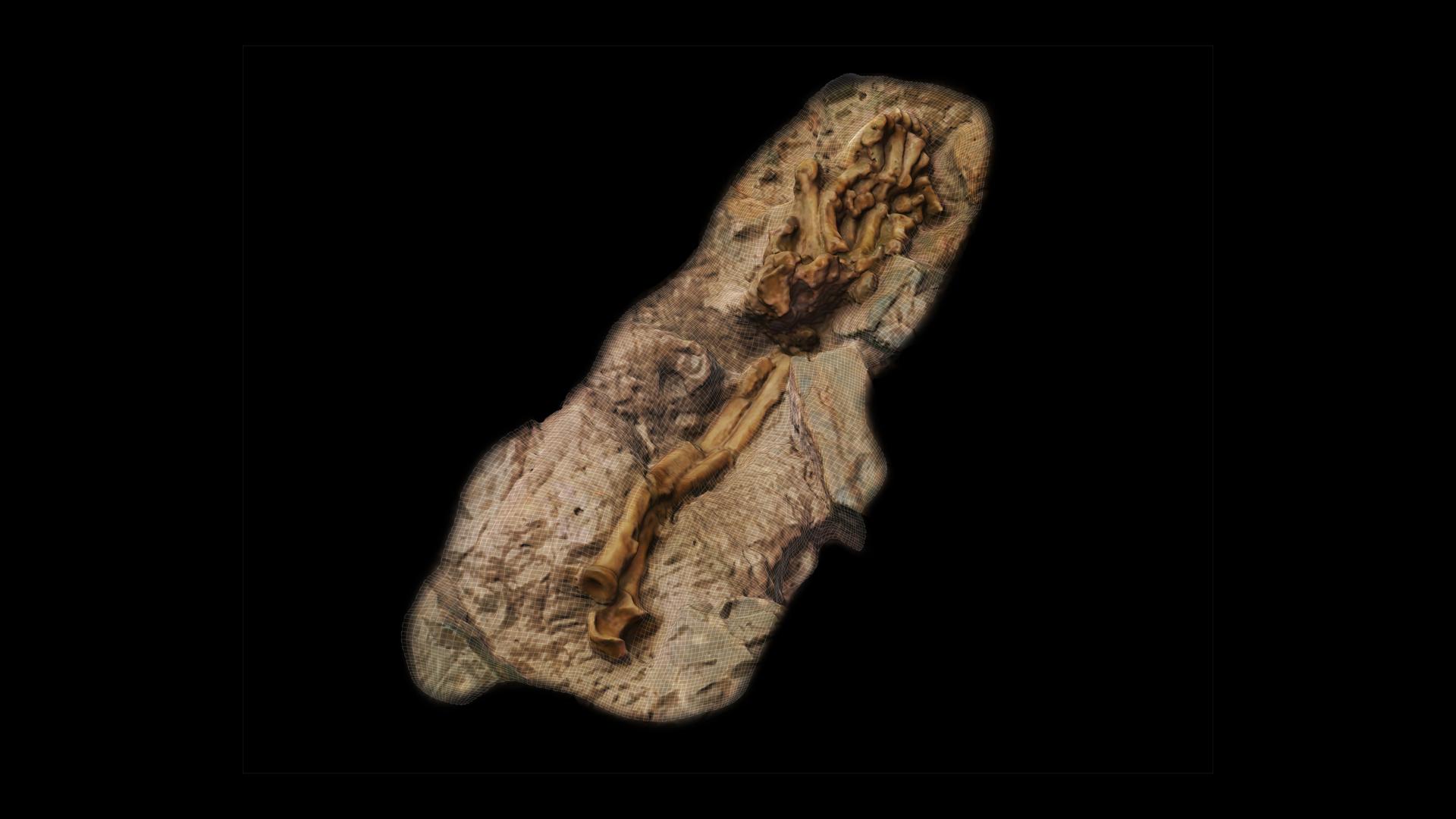 Numérisation 3D - 3D scanning - Little Foot