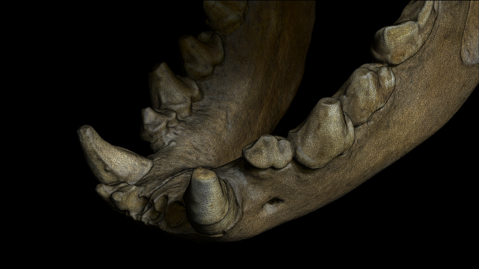 Numérisation 3D _ Scanning 3D _ Mandibule de Hyène