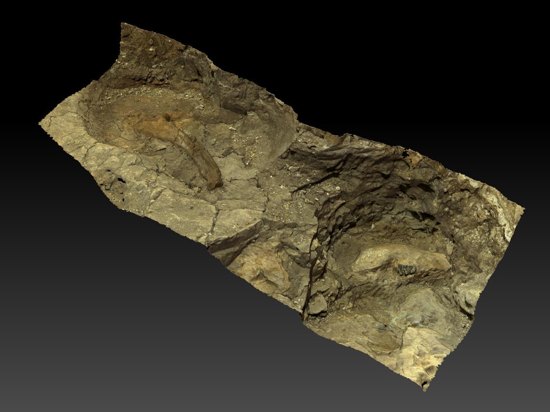 Numérisation 3D de fossiles