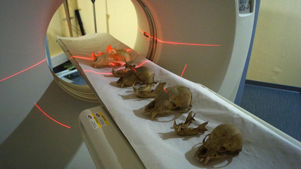 IMA Solutions - Tomographie rayons X