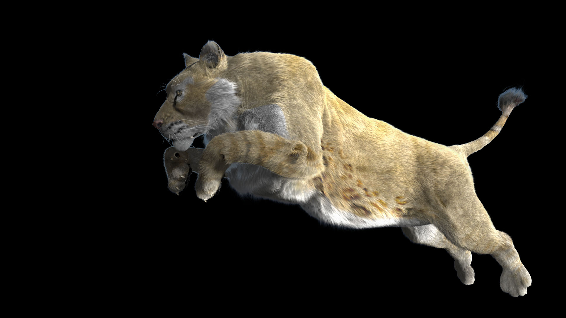 Panthera Leo Spelea Skeleton and 3D reconstruction