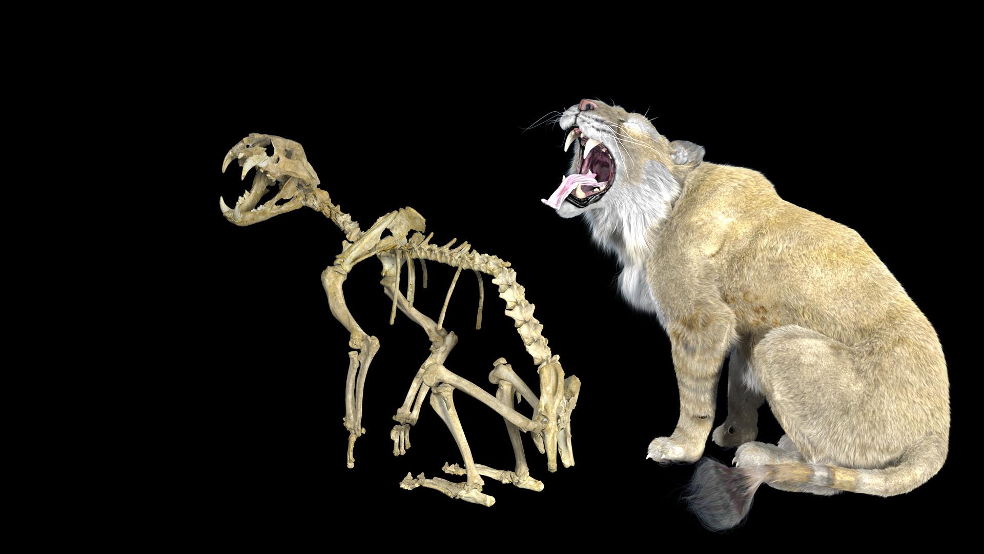 Lion Panthera Leo Spelea 3D