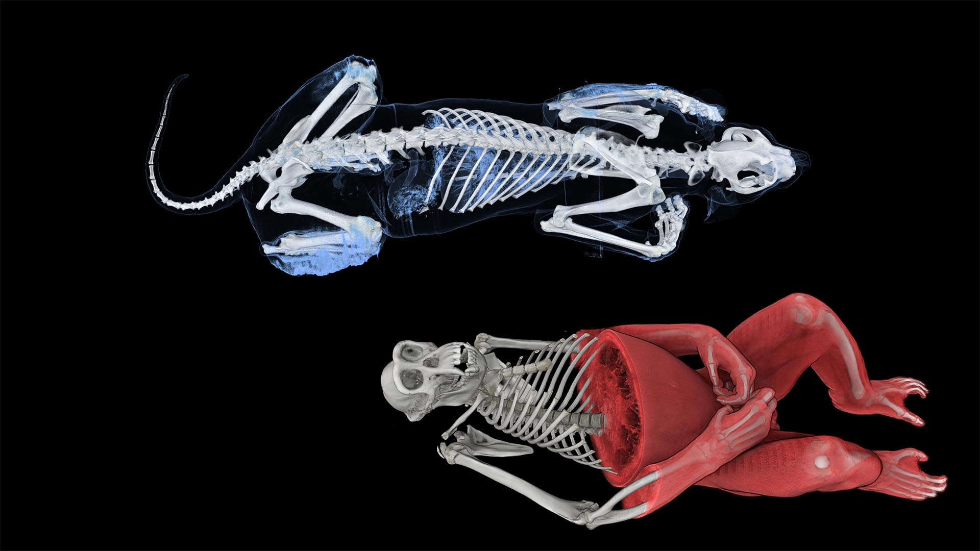 Inside Explorer - Animals Anatomy