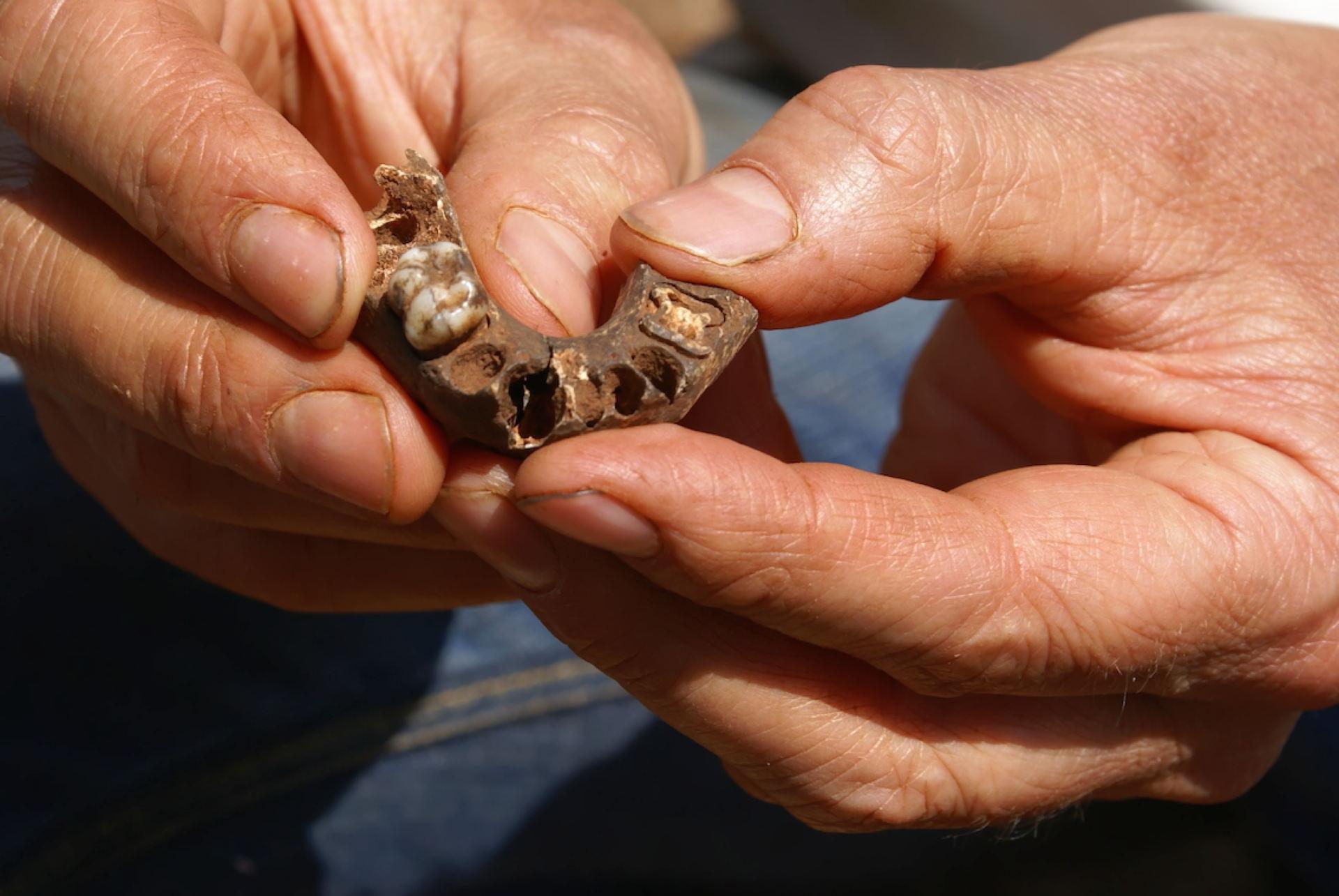 Fossile Kromdraai