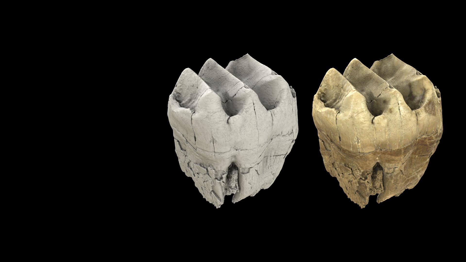 Modèles 3D des fossiles de Macrofaune