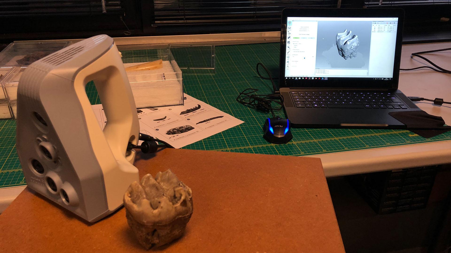 Numérisation 3D des fossiles de macrofaune